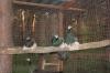 Птичий двор Успех